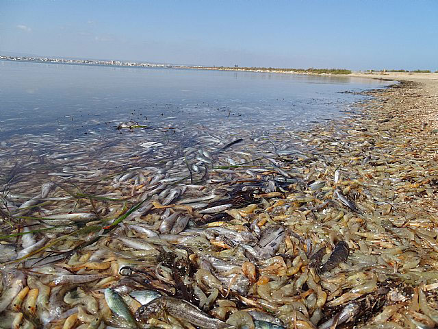 Aguas-contaminadas. Impacto-ecosistema-acuático.